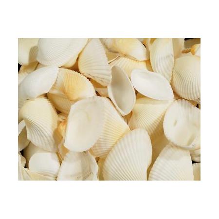 Coquilles Maritimes blanc 250g