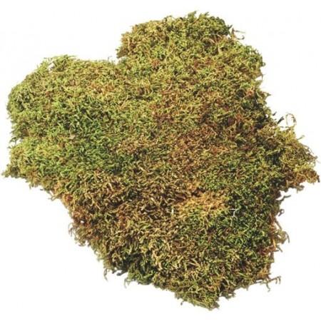 Plaque de mousse 50g vert
