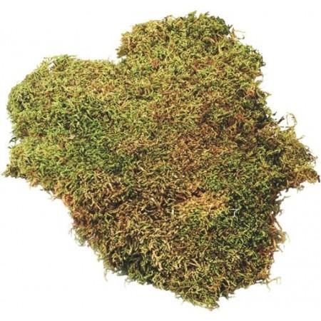 Plaque de mousse 100g vert