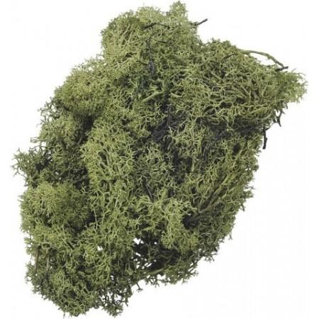 Mousse d'Islande 250g vert