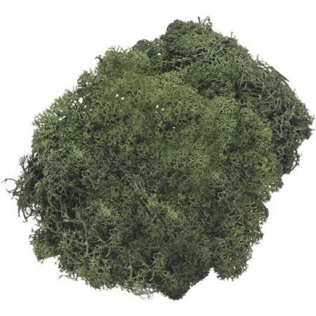 Mousse d'Islande 250g vert sapin
